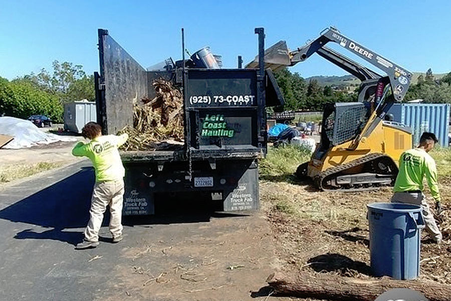 Junk removal experts performing brush removal services